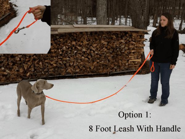 An orange leash