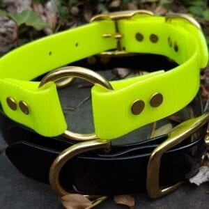 A neon black and yellow collar