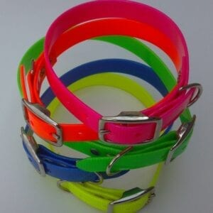 Neon colored collars